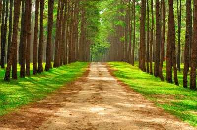 running a 5k : nature run