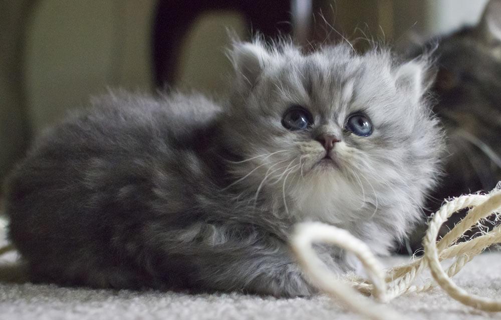kitten9999